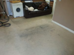 carpet cleaners review 101 1