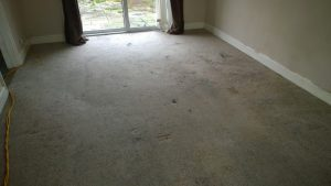 carpet cleaners review 261 1