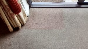 carpet cleaners review 338 1