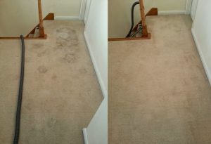 carpet cleaners review 341 1