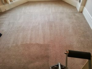 carpet cleaners review 406