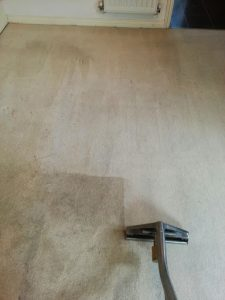 carpet cleaners review 411