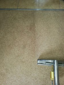 carpet cleaners review 422