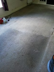 carpet cleaners review 424