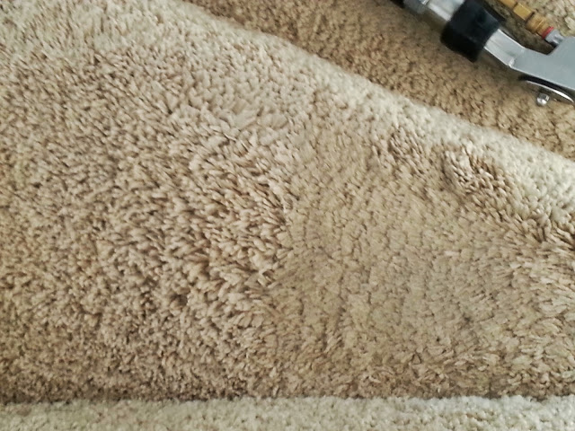 carpet cleaners review 432