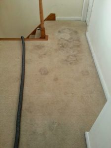 carpet cleaners review 434