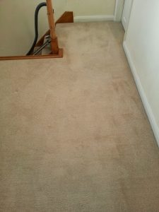carpet cleaners review 435