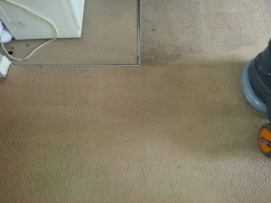 carpet cleaners review 444