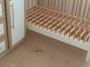 carpet cleaners review 95 1