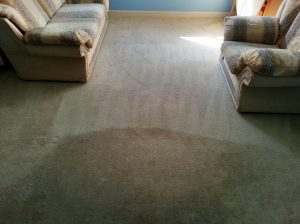 carpet cleaners reviews 9