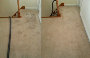 carpet cleaning shenfield 31