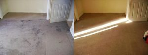 south woodham ferrers carpet cleaning 6